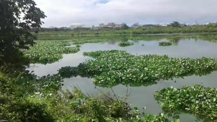 Caiado reitera pedido  para remoção de gigogas nos canais e lagoas da Barra e Recreio