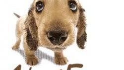 Implementado o Fundo de Proteção Animal na Cidade