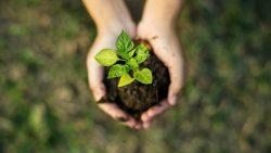 É lei: Execução de medida compensatória ambiental deve ser identificada por placas