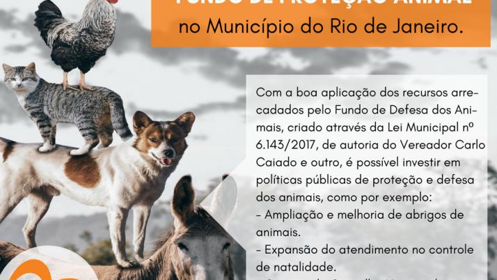 Prefeitura regulamenta a criação do Fundo de Defesa dos Animais